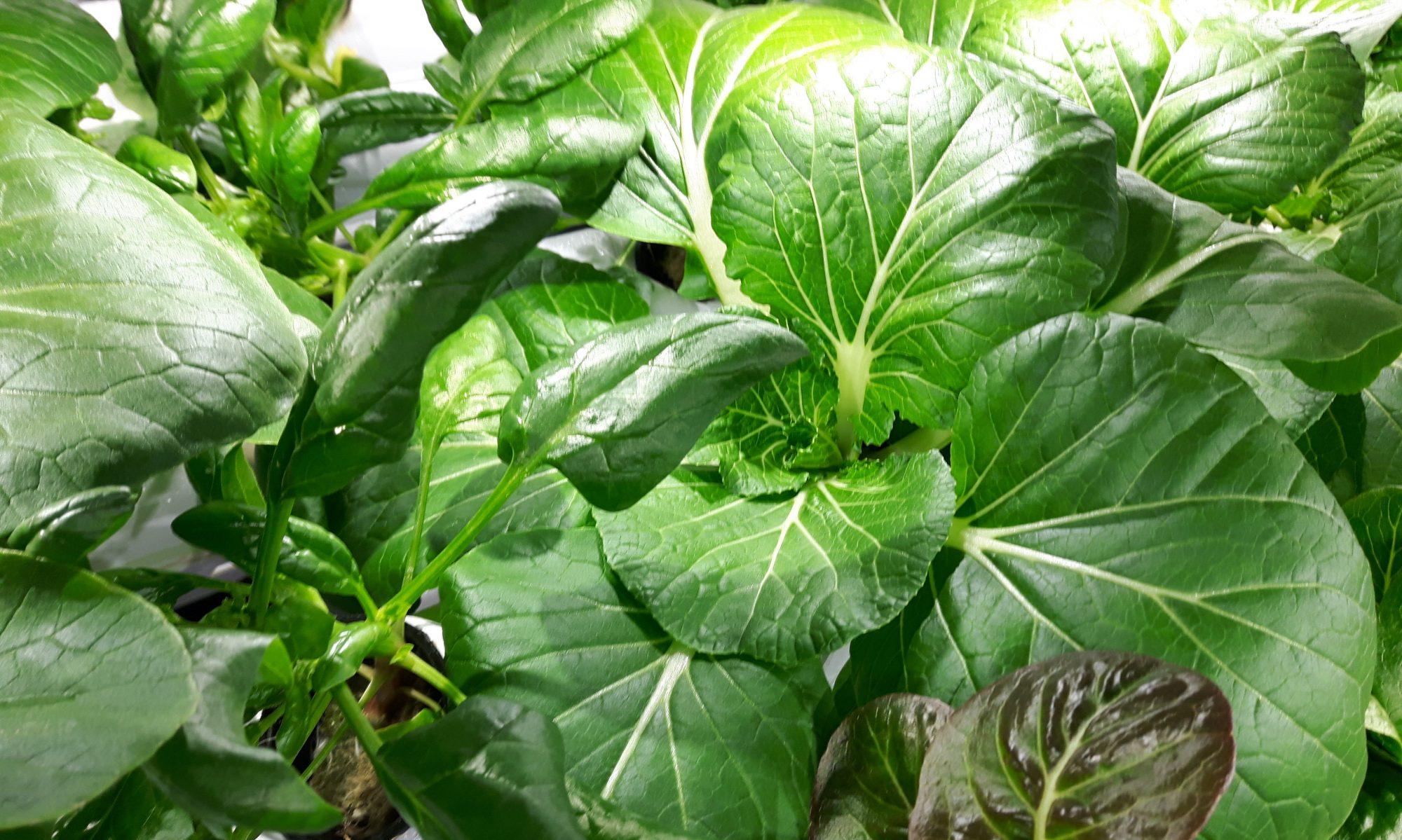 Agroperforme